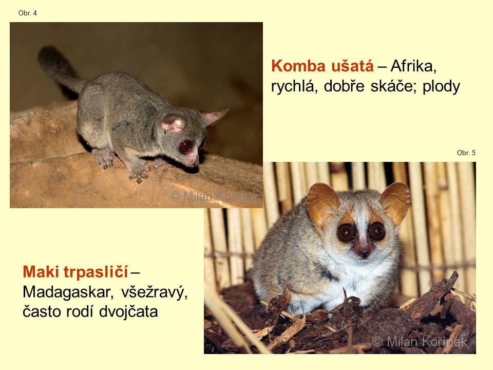 15 Komba ušatá – Afrika, rychlá, dobře skáče; plody Maki trpasličí – Madagaskar, všežravý, často rodí dvojčata Obr.