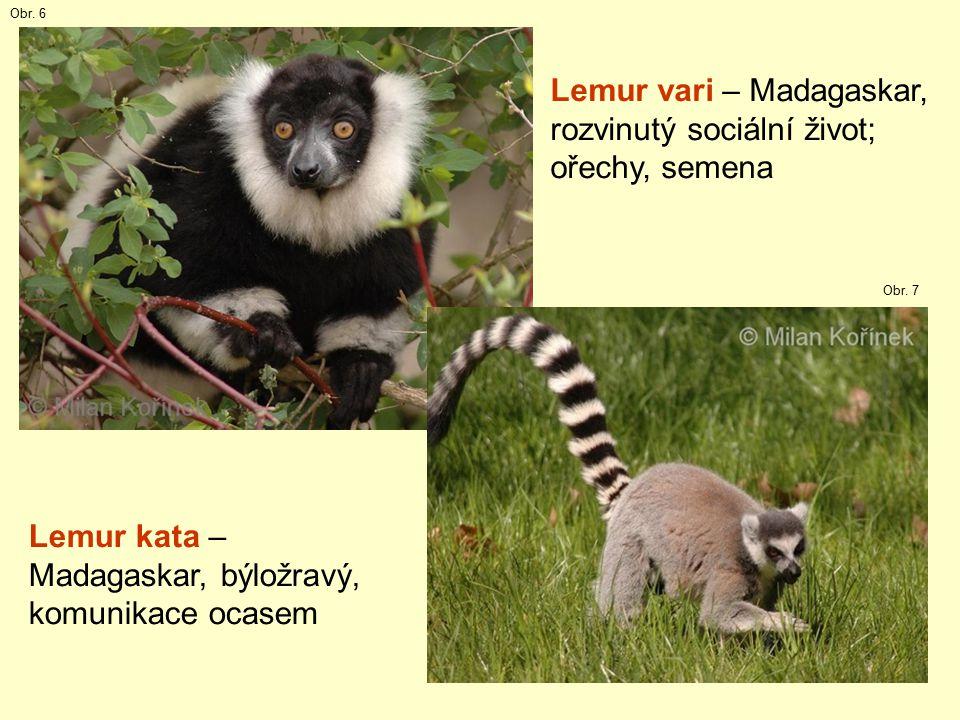 16 Lemur vari – Madagaskar, rozvinutý sociální život; ořechy, semena Lemur kata – Madagaskar, býložravý, komunikace ocasem Obr.