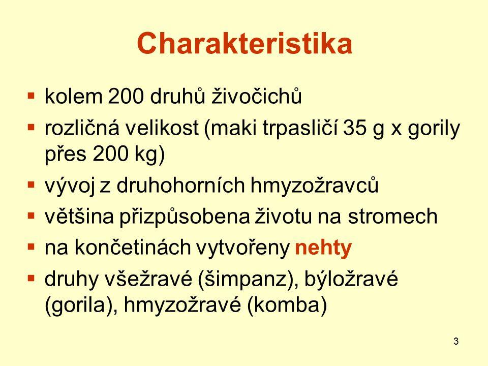14 Poloopice Outloň váhavý – JV Asie, pomalý pohyb, ale dobře šplhá i pozpátku; plody, pryskyřice i hmyz Obrázek dostupný na: http://www.zoopraha.cz/lexikon.php?i=39 http://www.zoopraha.cz/lexikon.php?i=39 Lori – Indie, štíhlý, dlouhé končetiny s palcem proti ostatním prstům; pohyb pomalý, váhavý, na zemi se stává snadnou kořistí hadů; živí se hmyzem Obr.