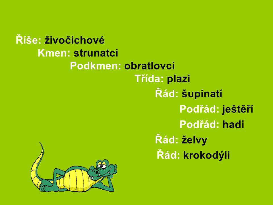 Říše: živočichové Kmen: strunatci Podkmen: obratlovci Třída: plazi Řád: šupinatí Podřád: ještěří Podřád: hadi Řád: želvy Řád: krokodýli