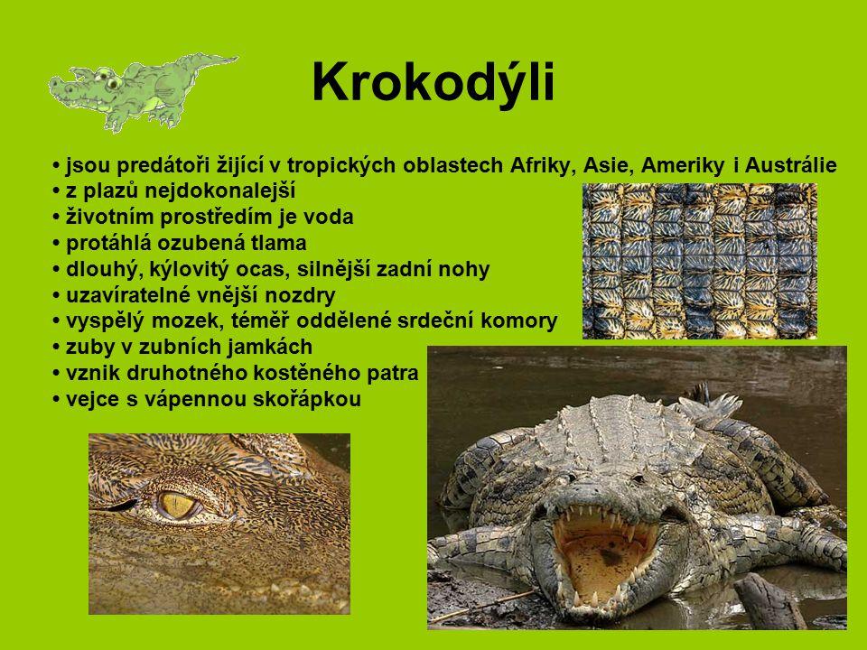 Krokodýli jsou predátoři žijící v tropických oblastech Afriky, Asie, Ameriky i Austrálie z plazů nejdokonalejší životním prostředím je voda protáhlá o