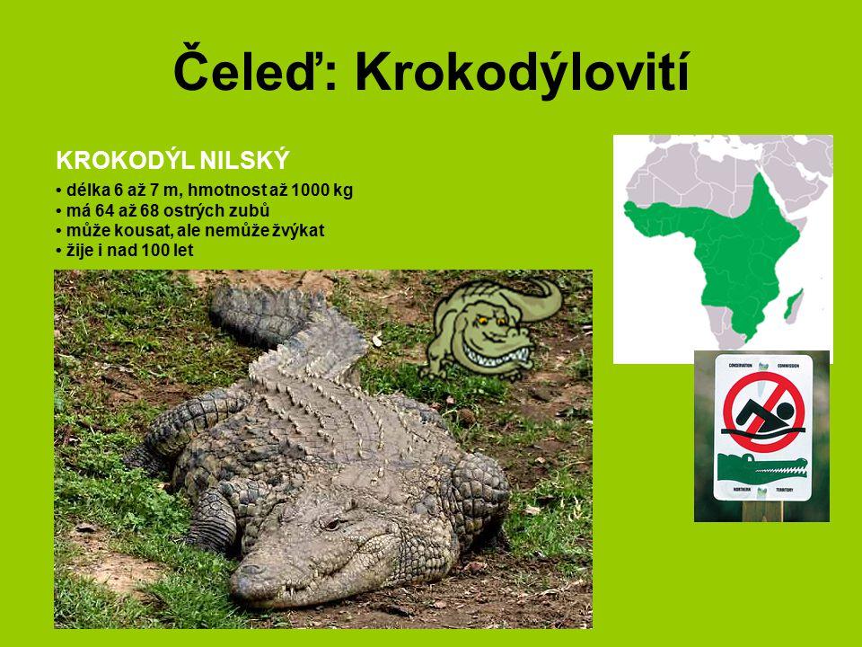 Čeleď: Krokodýlovití KROKODÝL NILSKÝ délka 6 až 7 m, hmotnost až 1000 kg má 64 až 68 ostrých zubů může kousat, ale nemůže žvýkat žije i nad 100 let