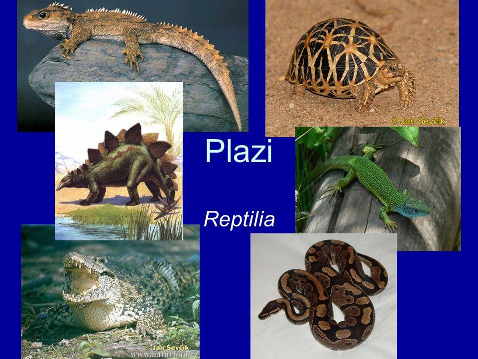 Plazi Reptilia