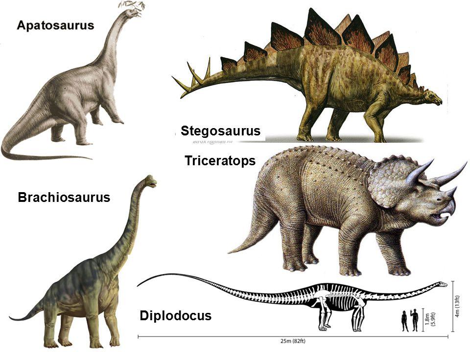 Brachiosaurus Stegosaurus Diplodocus Triceratops