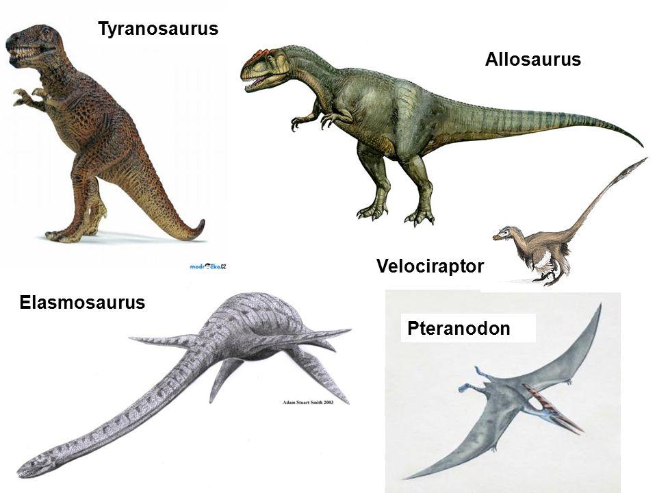 Tyranosaurus Allosaurus Elasmosaurus Pteranodon Velociraptor