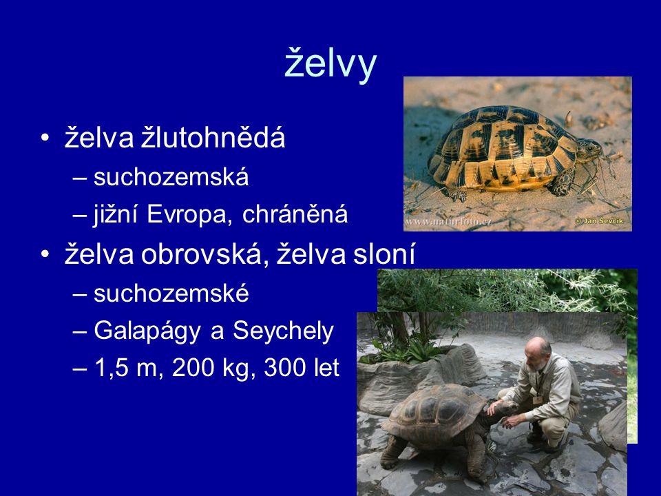 želvy želva žlutohnědá –suchozemská –jižní Evropa, chráněná želva obrovská, želva sloní –suchozemské –Galapágy a Seychely –1,5 m, 200 kg, 300 let