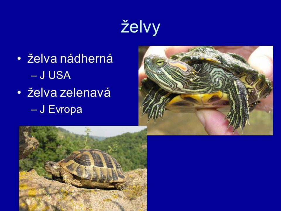 želvy želva nádherná –J USA želva zelenavá –J Evropa