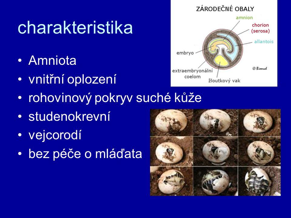 charakteristika Amniota vnitřní oplození rohovinový pokryv suché kůže studenokrevní vejcorodí bez péče o mláďata