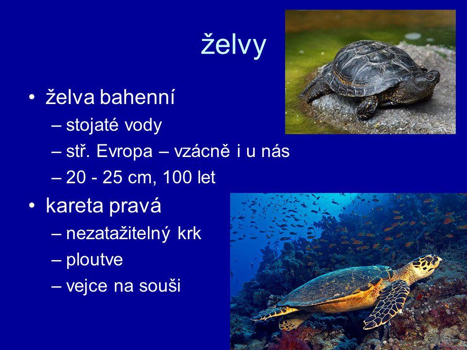 želvy želva bahenní –stojaté vody –stř.