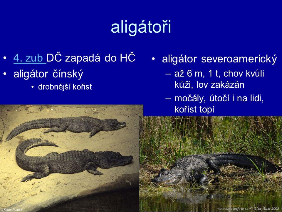 aligátoři 4.zub DČ zapadá do HČ4.