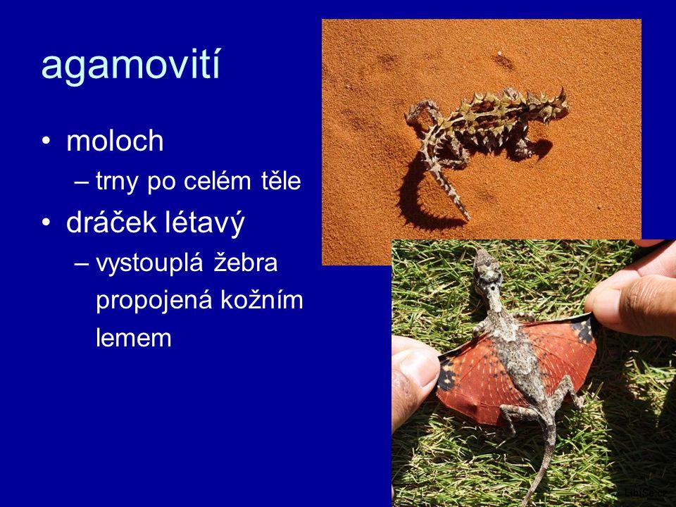 agamovití moloch –trny po celém těle dráček létavý –vystouplá žebra propojená kožním lemem