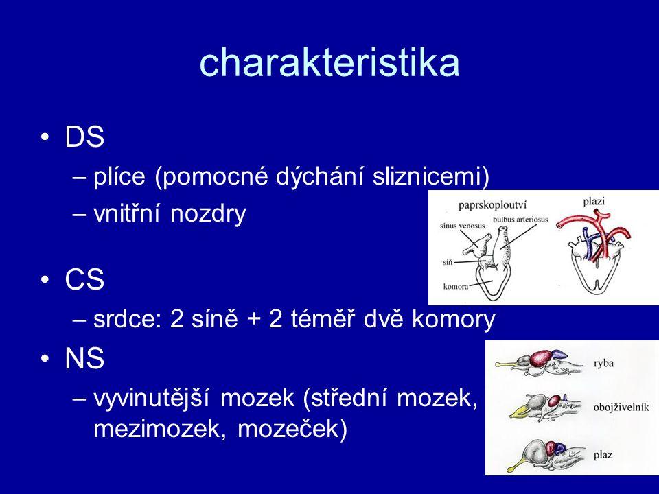 charakteristika DS –plíce (pomocné dýchání sliznicemi) –vnitřní nozdry CS –srdce: 2 síně + 2 téměř dvě komory NS –vyvinutější mozek (střední mozek, mezimozek, mozeček)