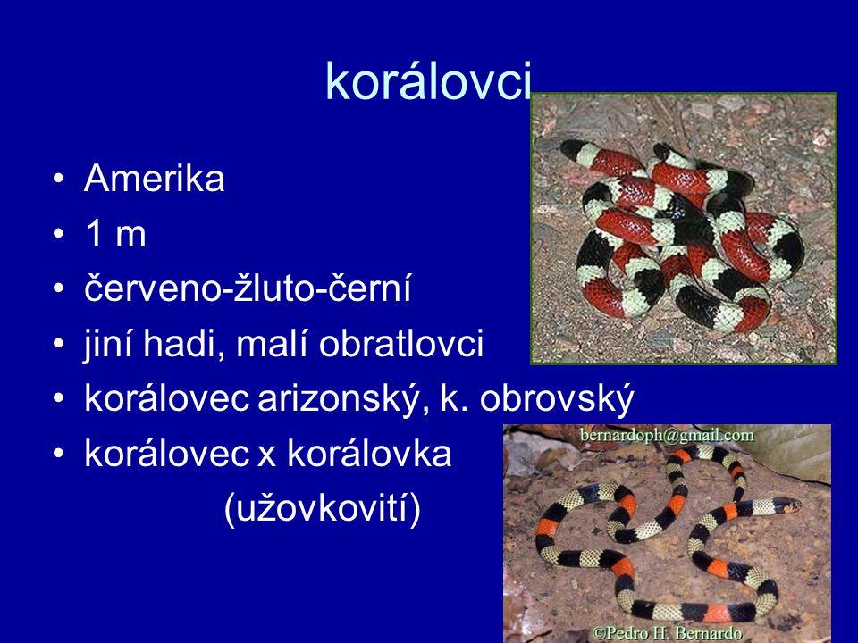 korálovci Amerika 1 m červeno-žluto-černí jiní hadi, malí obratlovci korálovec arizonský, k.