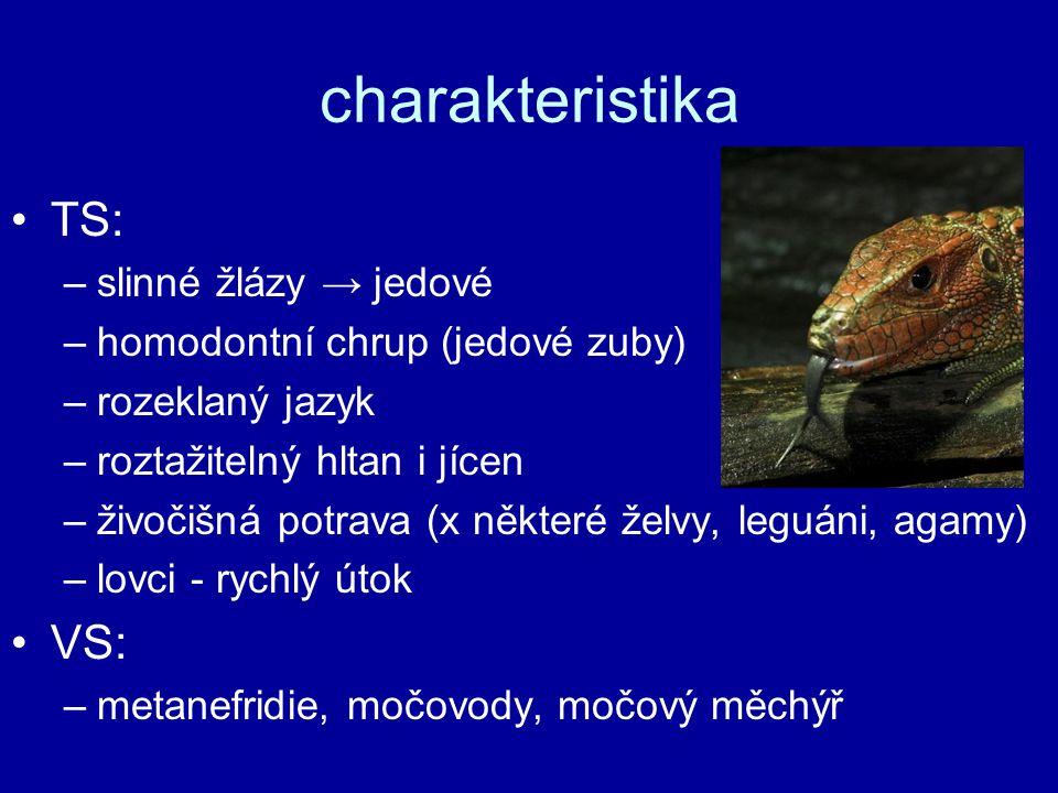 charakteristika TS: –slinné žlázy → jedové –homodontní chrup (jedové zuby) –rozeklaný jazyk –roztažitelný hltan i jícen –živočišná potrava (x některé želvy, leguáni, agamy) –lovci - rychlý útok VS: –metanefridie, močovody, močový měchýř