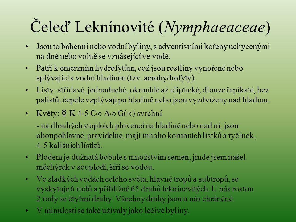 Čeleď Leknínovité (Nymphaeaceae) Jsou to bahenní nebo vodní byliny, s adventivními kořeny uchycenými na dně nebo volně se vznášející ve vodě. Patří k