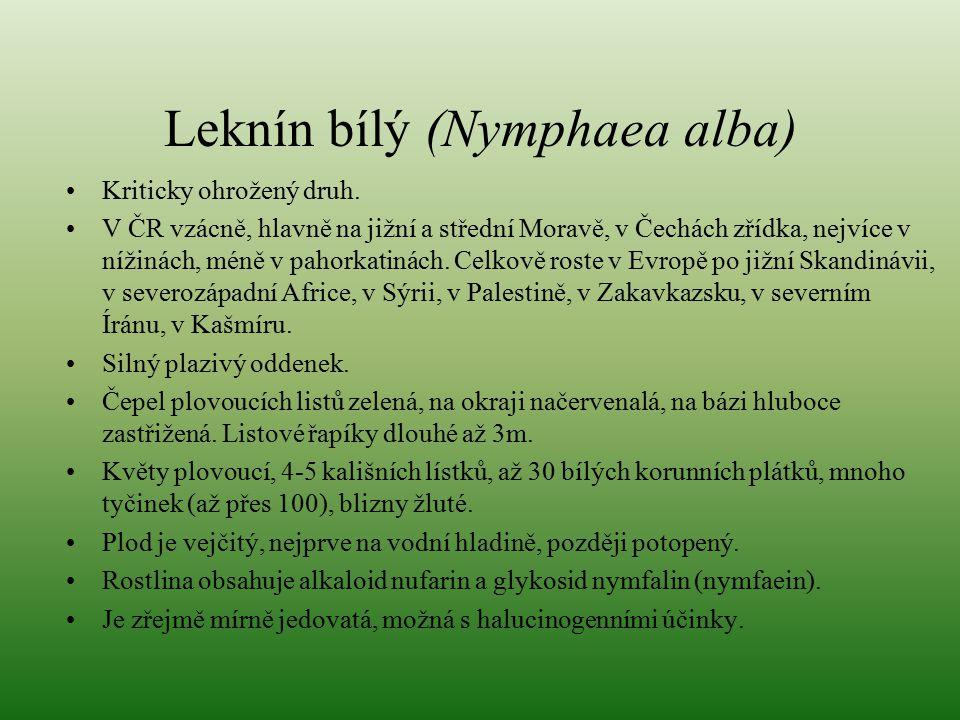 Leknín bílý (Nymphaea alba) Kriticky ohrožený druh. V ČR vzácně, hlavně na jižní a střední Moravě, v Čechách zřídka, nejvíce v nížinách, méně v pahork
