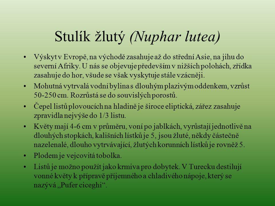 Stulík žlutý (Nuphar lutea) Výskyt v Evropě, na východě zasahuje až do střední Asie, na jihu do severní Afriky. U nás se objevuje především v nižších