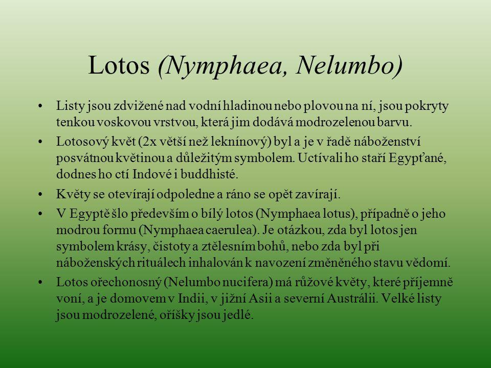 Lotos (Nymphaea, Nelumbo) Listy jsou zdvižené nad vodní hladinou nebo plovou na ní, jsou pokryty tenkou voskovou vrstvou, která jim dodává modrozeleno