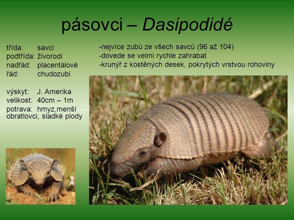 pásovci – Dasipodidé třída: savci podtřída: živorodí nadřád: placentálové řád: chudozubí výskyt: J. Amerika velikost: 40cm – 1m potrava: hmyz,menší ob