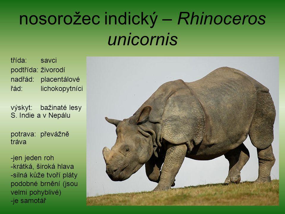 nosorožec indický – Rhinoceros unicornis třída: savci podtřída: živorodí nadřád: placentálové řád: lichokopytníci výskyt: bažinaté lesy S. Indie a v N