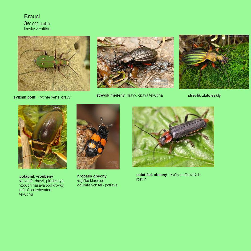 světluška větší v noci světélkují - luciferin samec - létá samice - nemá křídla kovařík - na zádech - cvakne vymrští se na nohy larva = drátovec kovařík obilní - na hosp.