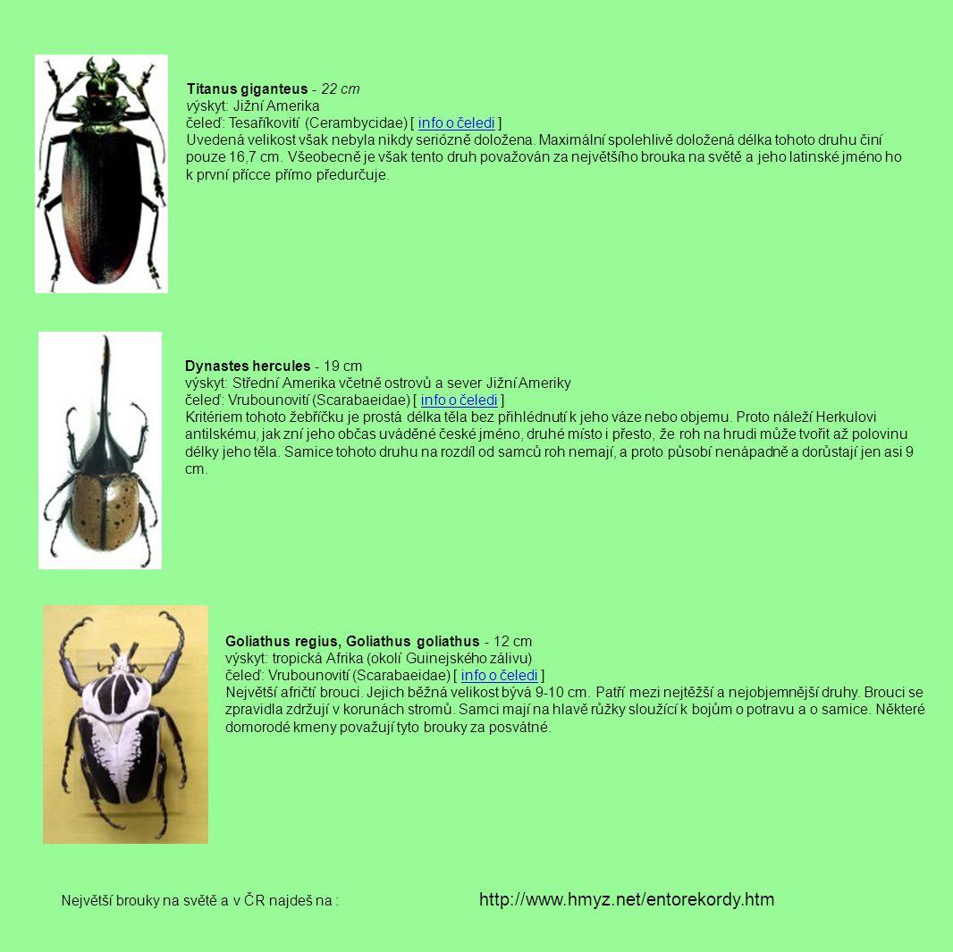 Titanus giganteus - 22 cm výskyt: Jižní Amerika čeleď: Tesaříkovití (Cerambycidae) [ info o čeledi ] Uvedená velikost však nebyla nikdy seriózně doložena.