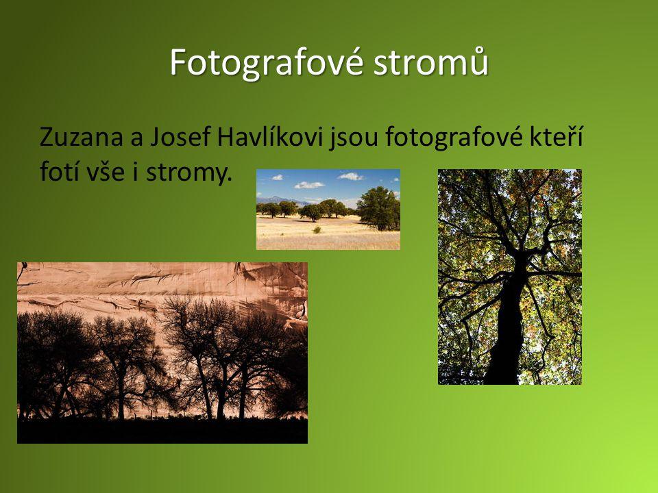 Fotografové stromů Zuzana a Josef Havlíkovi jsou fotografové kteří fotí vše i stromy.