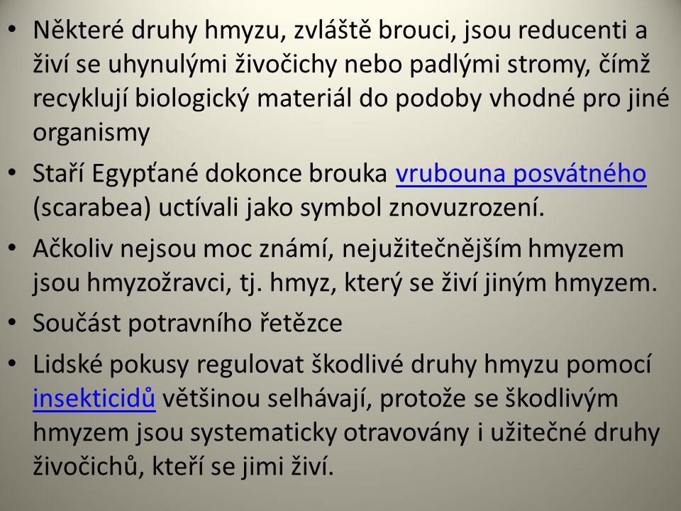 Některé druhy hmyzu, zvláště brouci, jsou reducenti a živí se uhynulými živočichy nebo padlými stromy, čímž recyklují biologický materiál do podoby vhodné pro jiné organismy Staří Egypťané dokonce brouka vrubouna posvátného (scarabea) uctívali jako symbol znovuzrození.vrubouna posvátného Ačkoliv nejsou moc známí, nejužitečnějším hmyzem jsou hmyzožravci, tj.