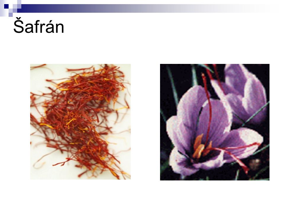 Durman obecný Říše:rostliny (Plantae) Podříše:cévnaté rostliny (Tracheobionta) Oddělení:krytosemenné (Magnoliophyta) Třída:vyšší dvouděložné (Rosopsida) Řád:krtičníkotvaré (Scrophulariales) Čeleď:lilkovité (Solanaceae) Rod:durman (Datura) Durman je 0,5 až 1 metr vysoká jednoletá bylina.
