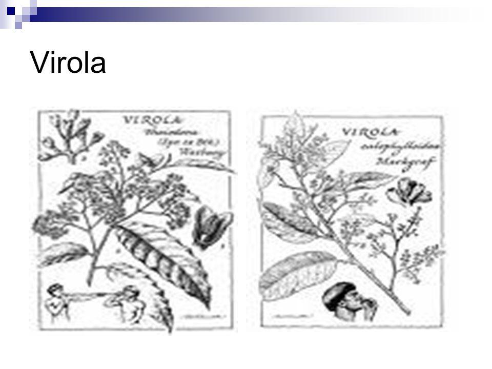 Virola