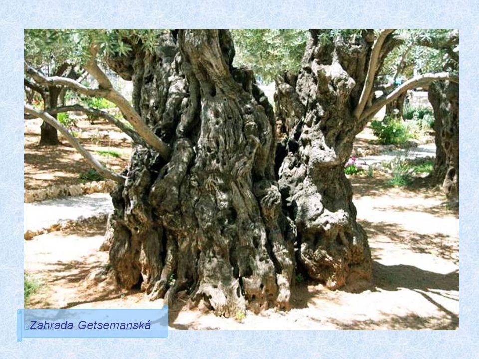 Zahrada Getsemanská