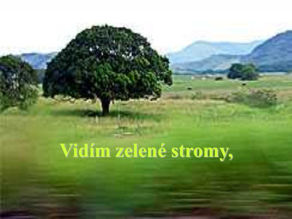 Vidím zelené stromy,