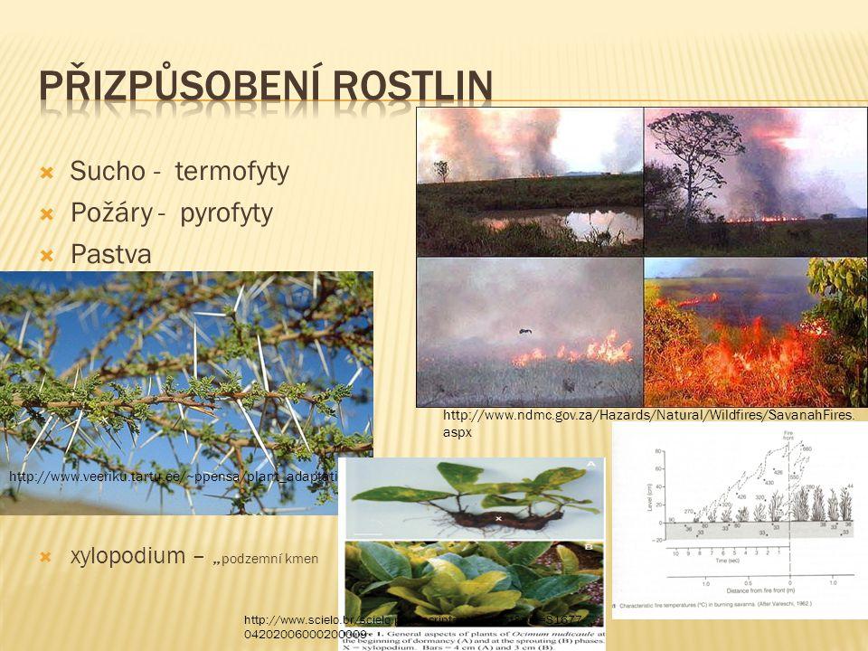 " Sucho - termofyty  Požáry - pyrofyty  Pastva  xylopodia  xylopodium – "" podzemní kmen http://www.ndmc.gov.za/Hazards/Natural/Wildfires/SavanahFi"