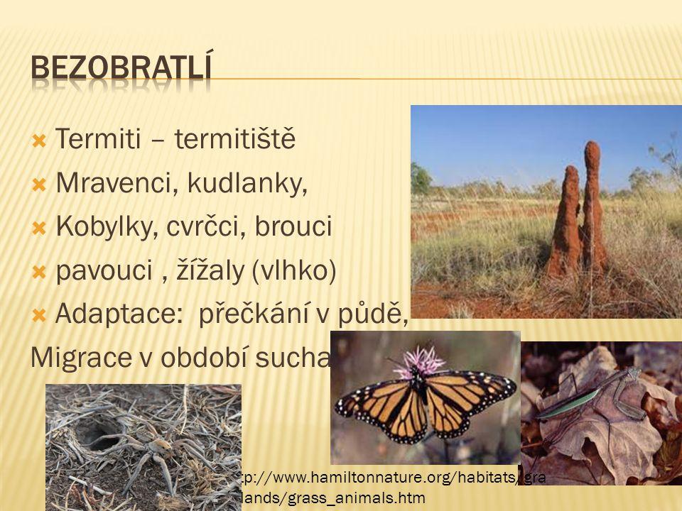  Termiti – termitiště  Mravenci, kudlanky,  Kobylky, cvrčci, brouci  pavouci, žížaly (vlhko)  Adaptace: přečkání v půdě, Migrace v období sucha h