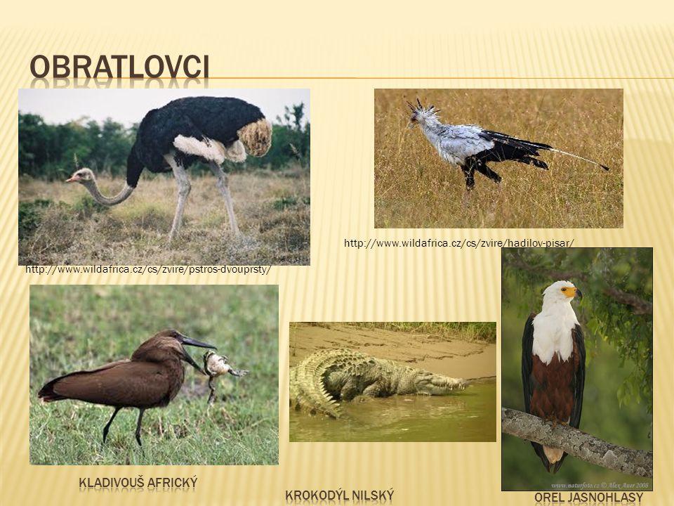http://www.wildafrica.cz/cs/zvire/pstros-dvouprsty/ http://www.wildafrica.cz/cs/zvire/hadilov-pisar/