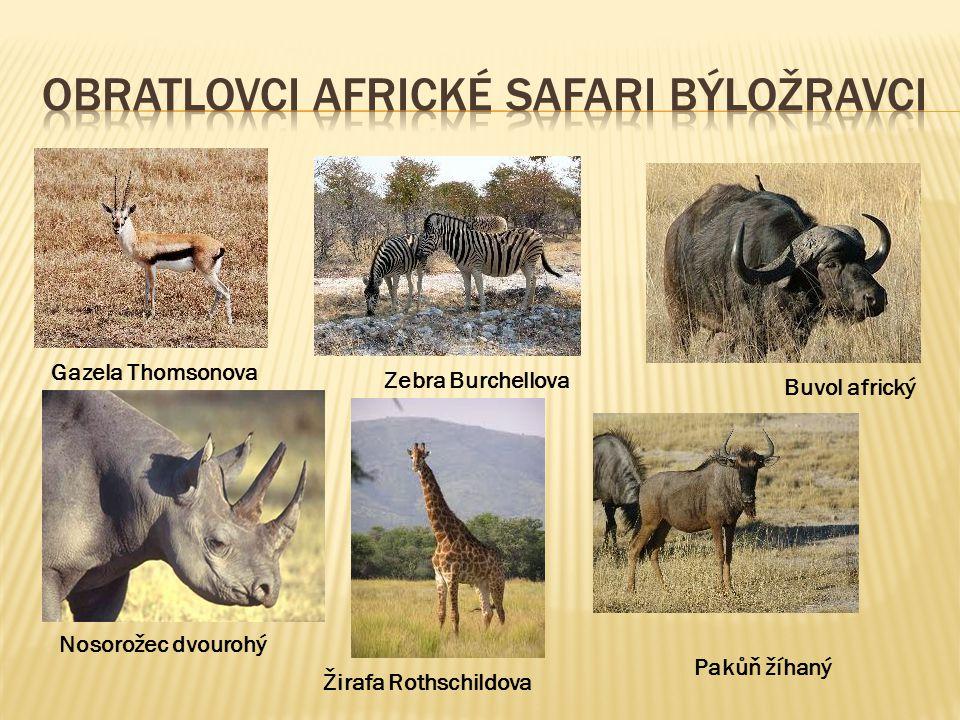 Buvol africký Gazela Thomsonova Zebra Burchellova Nosorožec dvourohý Žirafa Rothschildova Pakůň žíhaný