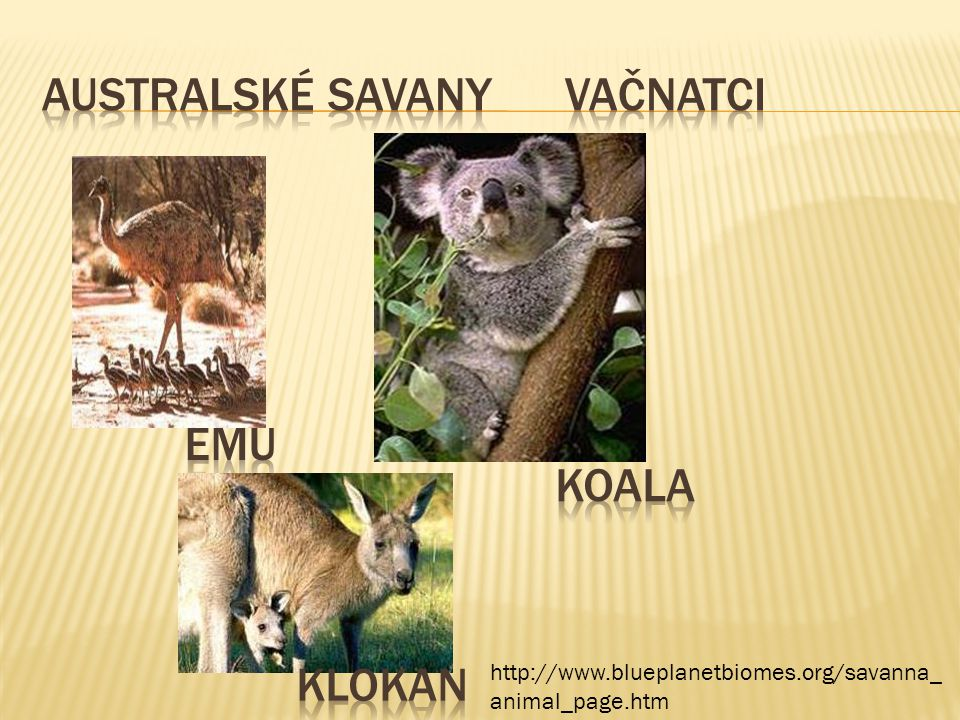 http://www.blueplanetbiomes.org/savanna_ animal_page.htm