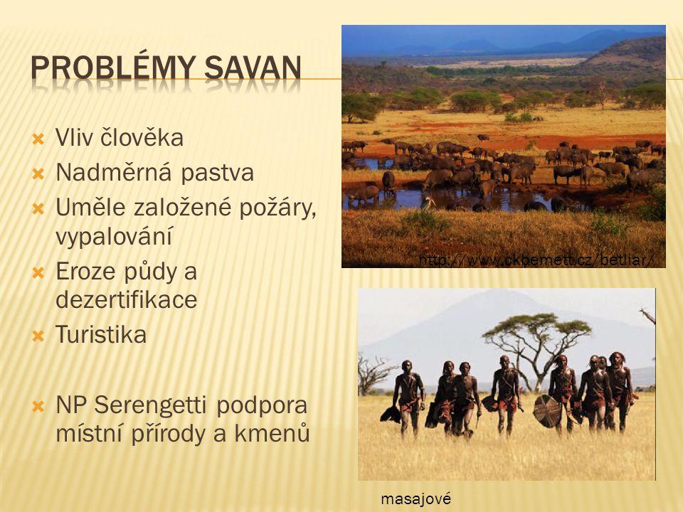  Vliv člověka  Nadměrná pastva  Uměle založené požáry, vypalování  Eroze půdy a dezertifikace  Turistika  NP Serengetti podpora místní přírody a