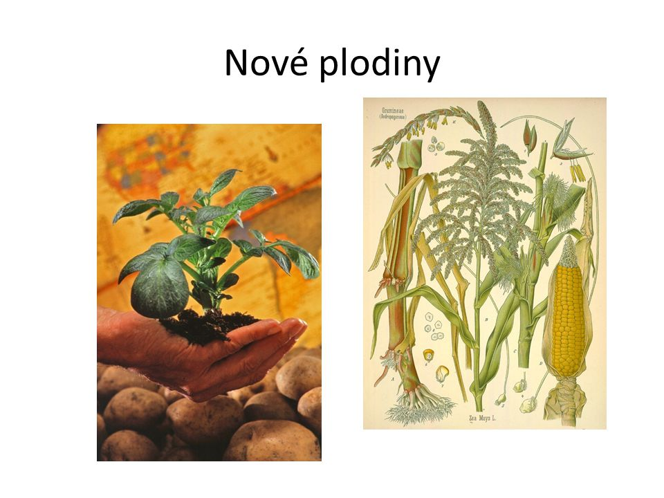 Střídavé hospodaření v zemědělství