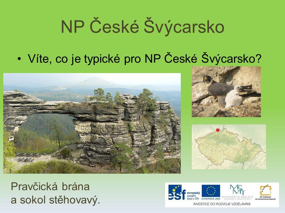 NP České Švýcarsko Víte, co je typické pro NP České Švýcarsko? Pravčická brána a sokol stěhovavý.