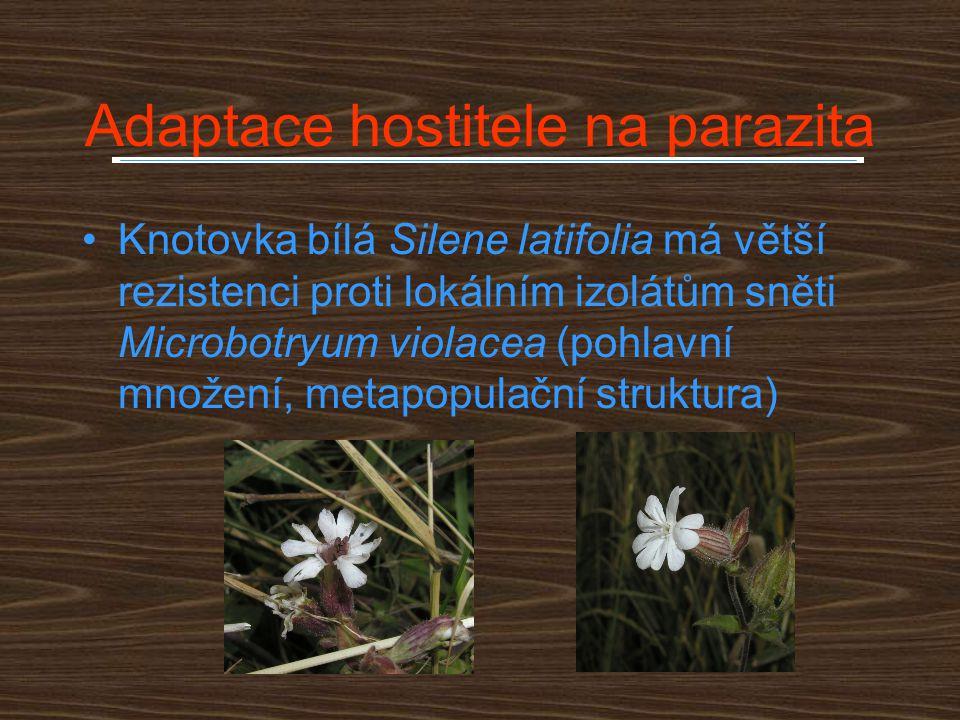Adaptace hostitele na parazita Knotovka bílá Silene latifolia má větší rezistenci proti lokálním izolátům sněti Microbotryum violacea (pohlavní množen