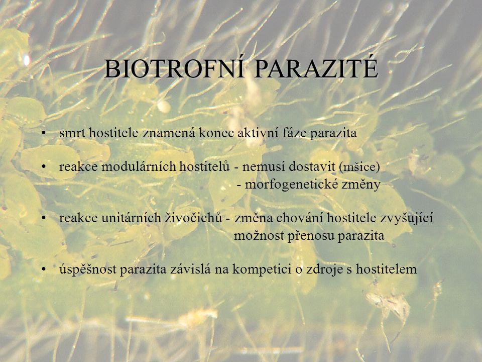BIOTROFNÍPARAZITÉ BIOTROFNÍ PARAZITÉ smrt hostitele znamená konec aktivní fáze parazita reakce modulárních hostitelů - nemusí dostavit (mšice) - morfo