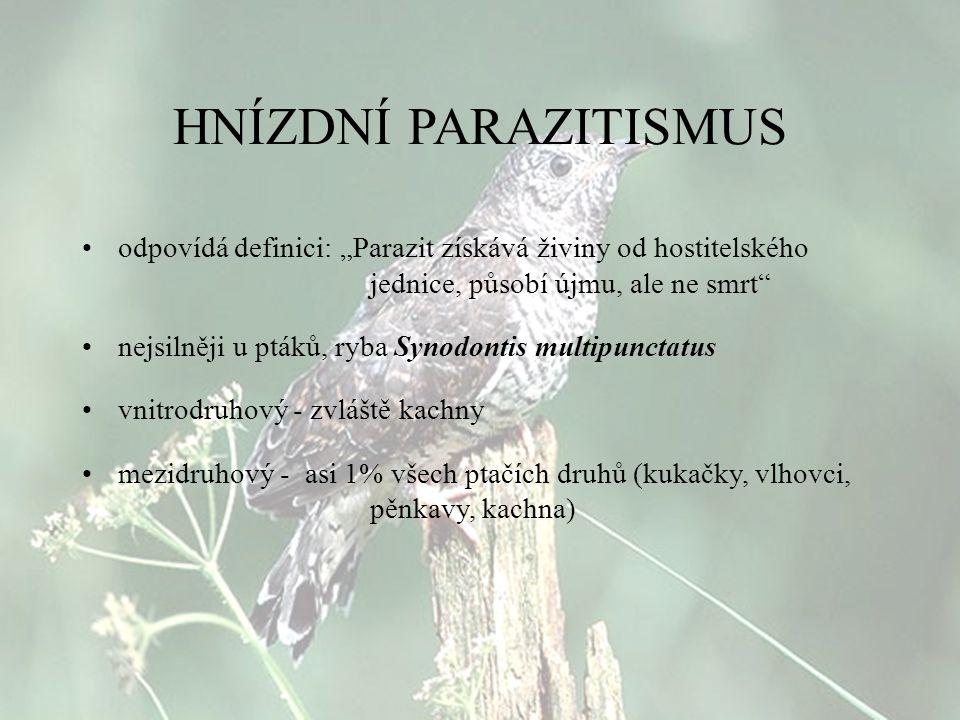 """HNÍZDNÍ PARAZITISMUS odpovídá definici: """"Parazit získává živiny od hostitelského jednice, působí újmu, ale ne smrt"""" nejsilněji u ptáků, ryba Synodonti"""
