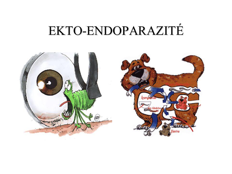 EKTOENDOPARAZITÉ EKTO-ENDOPARAZITÉ