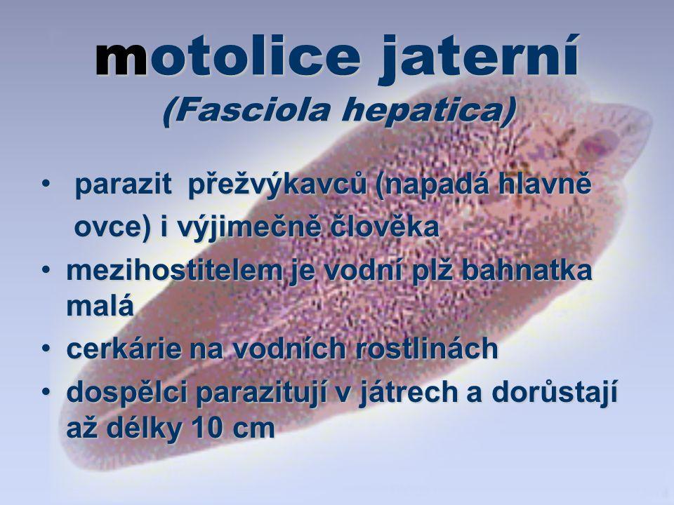 motolice jaterní (Fasciola hepatica) parazit přežvýkavců (napadá hlavně parazit přežvýkavců (napadá hlavně ovce) i výjimečně člověka ovce) i výjimečně