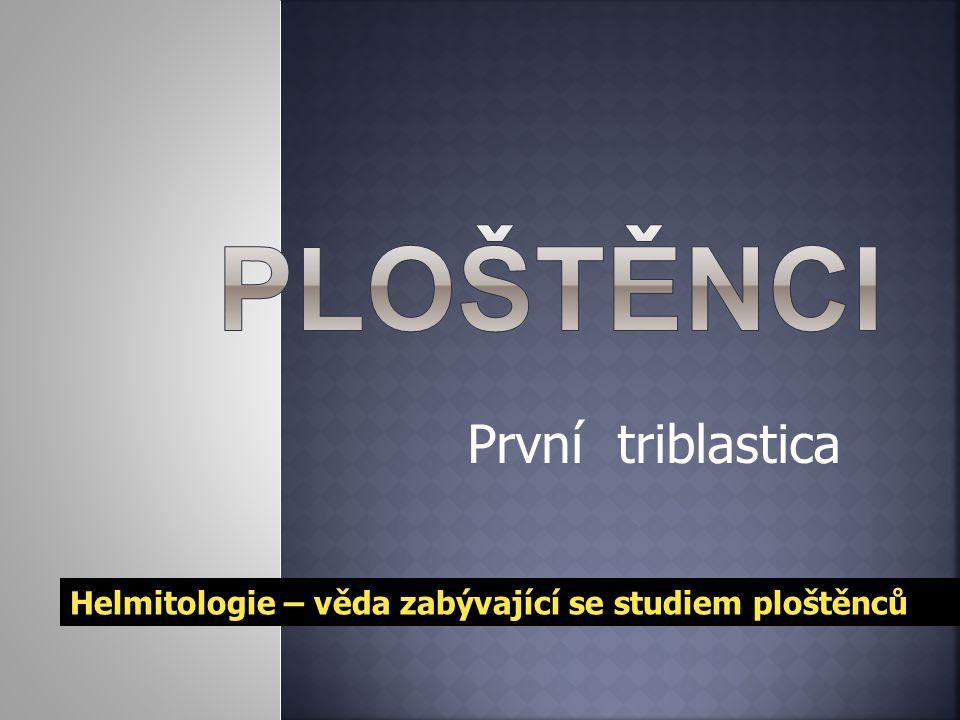 První triblastica Helmitologie – věda zabývající se studiem ploštěnců