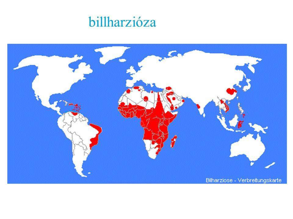 billharzióza