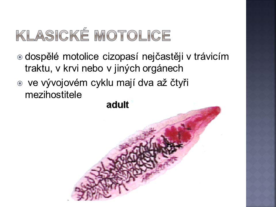  dospělé motolice cizopasí nejčastěji v trávicím traktu, v krvi nebo v jiných orgánech  ve vývojovém cyklu mají dva až čtyři mezihostitele
