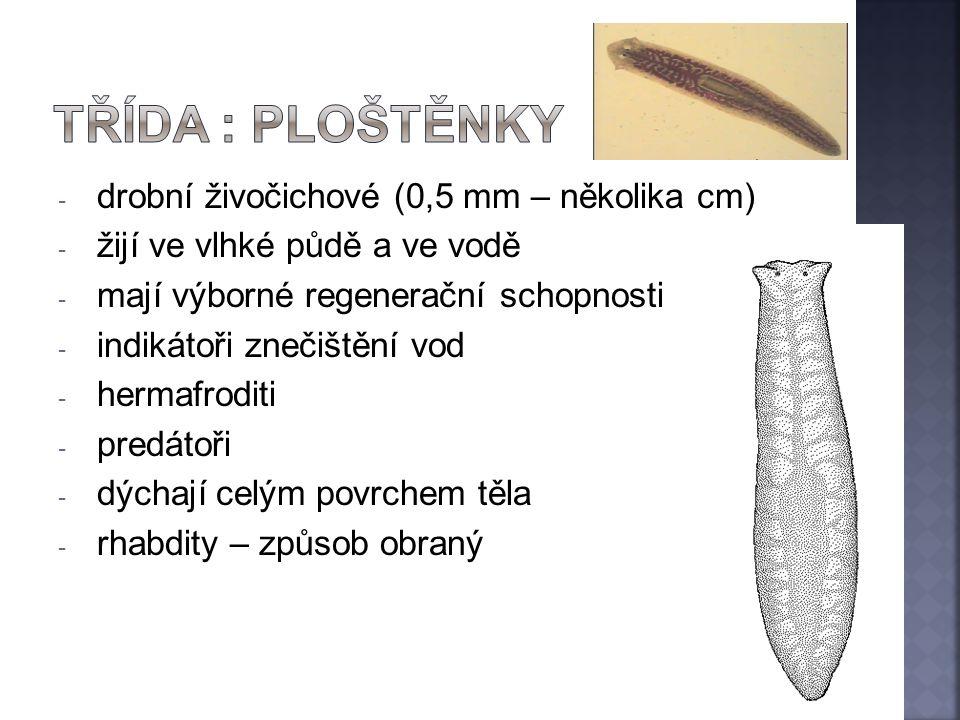 - drobní živočichové (0,5 mm – několika cm) - žijí ve vlhké půdě a ve vodě - mají výborné regenerační schopnosti - indikátoři znečištění vod - hermafr