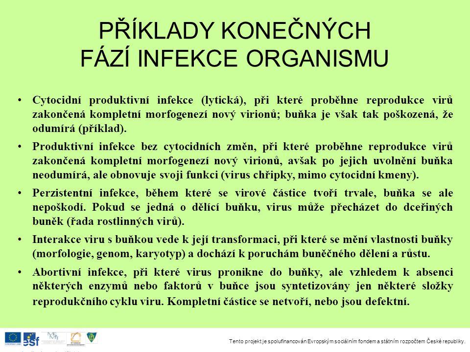 Tento projekt je spolufinancován Evropským sociálním fondem a státním rozpočtem České republiky. Investice do rozvoje vzdělávání Cytocidní produktivní